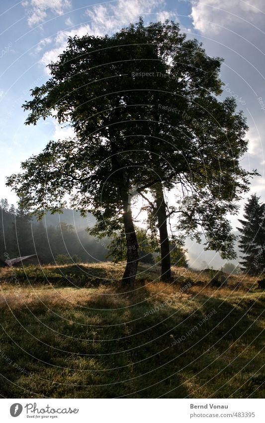 Zusammen Natur blau schön grün weiß Sommer Baum ruhig Landschaft Haus schwarz Wald Umwelt Berge u. Gebirge Wiese Gefühle
