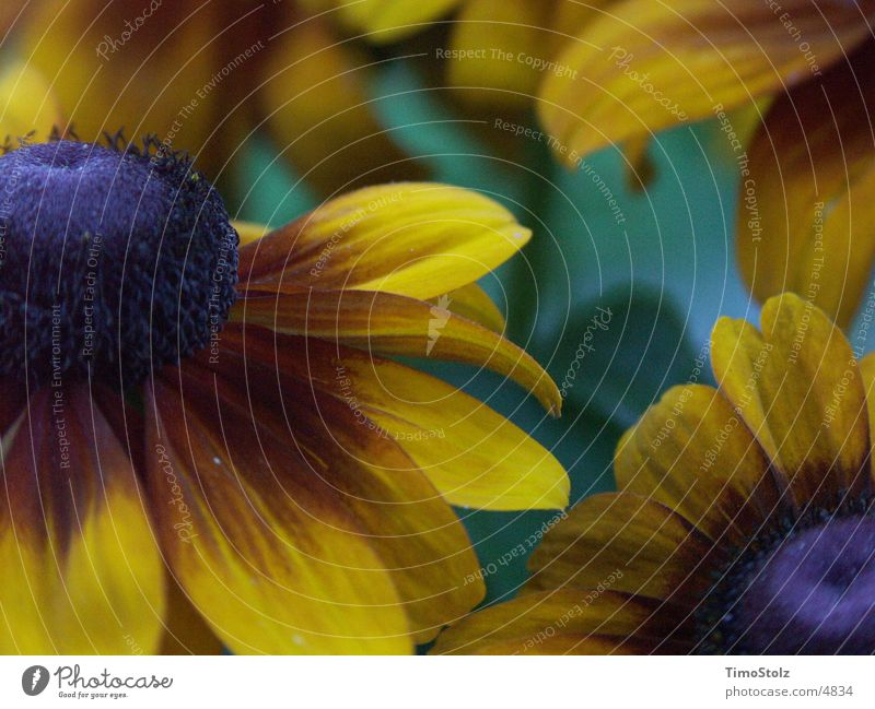 Das Blumenfinster grün gelb kalt Sonnenblume Unschärfe