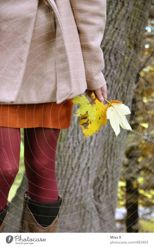 Herbstlaub Mensch feminin Junge Frau Jugendliche 1 18-30 Jahre Erwachsene Natur Schönes Wetter Baum Blatt Park Wald Mantel gelb Stimmung Fröhlichkeit