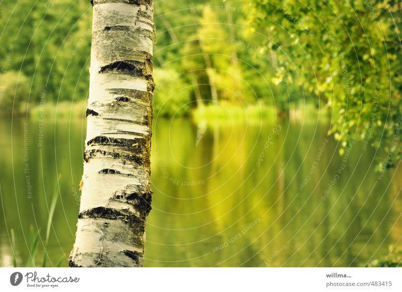 Birkenstamm mit See im Hintergrund Birkenrinde Baumstamm Teich gelb grün weiß Strukturen & Formen Natur Landschaft Pflanze Schönes Wetter sommerlich