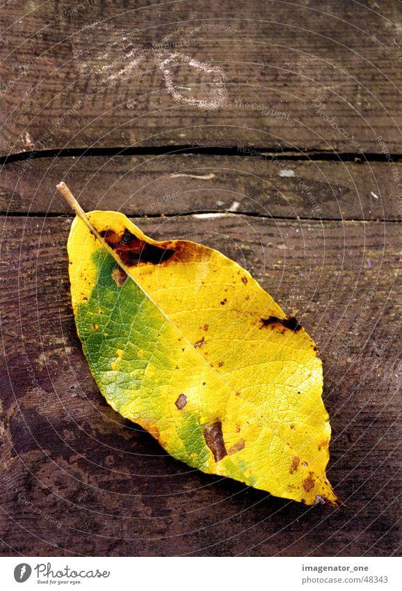 0007 Blatt Herbst Holz