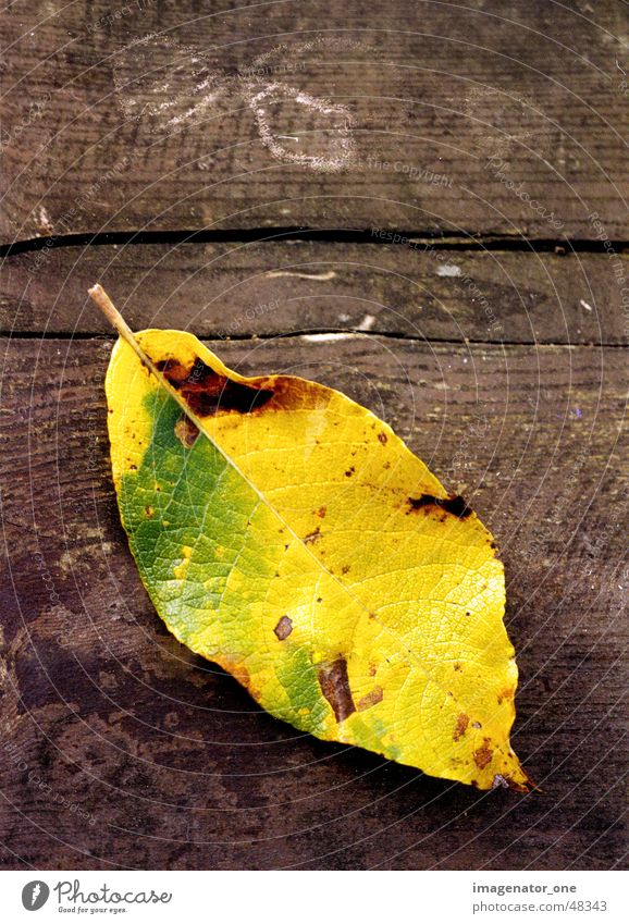 0007 Herbst Holz Blatt herbsttimmung Strukturen & Formen Makroaufnahme