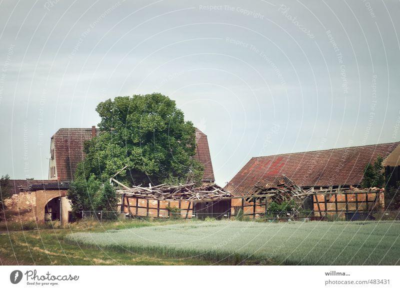 einfallsreichtum Baum Feld Dorf Menschenleer Haus Ruine Bauwerk Gebäude Fachwerkhaus Dach historisch kaputt Verfall Vergänglichkeit Wandel & Veränderung