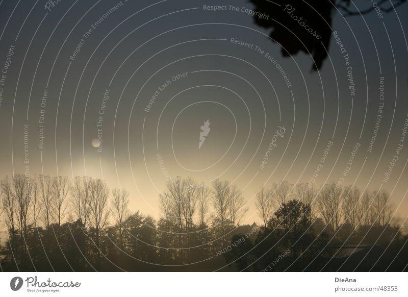 Es war einmal... Baum Sonne Blatt Landschaft dunkel Herbst Nebel Wandel & Veränderung Hoffnung Ast Abenddämmerung schlechtes Wetter