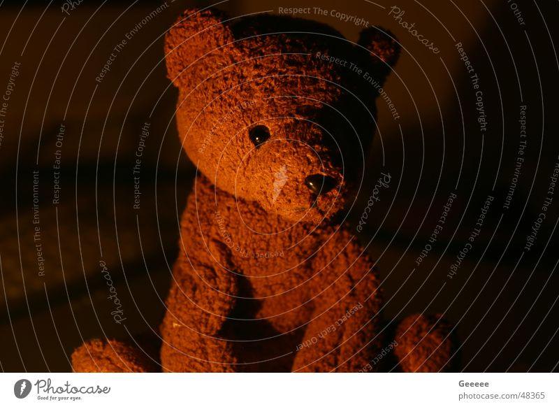 Teddy Stofftiere Teddybär niedlich süß Bär