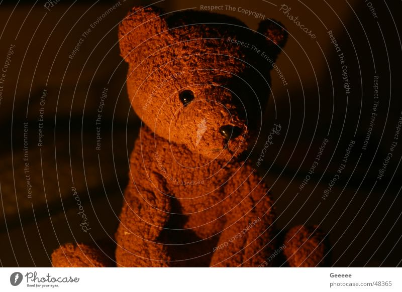 Teddy süß niedlich Bär Teddybär Stofftiere