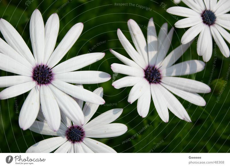 Blumen Blume Blüte
