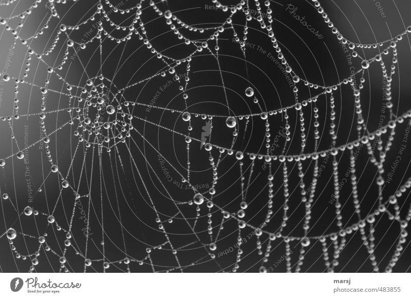 schwarzweißgrau | fast hundert Perlen Natur Wasser Sommer Herbst Frühling außergewöhnlich träumen Stimmung Kunst elegant leuchten Wassertropfen einfach