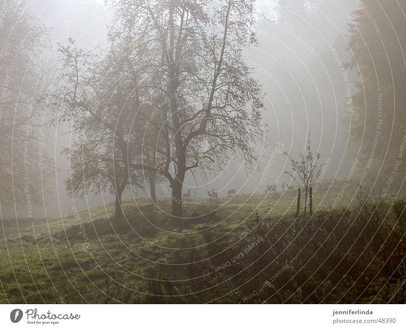 Rehe im Nebel Herbst Wildtier Waldlichtung
