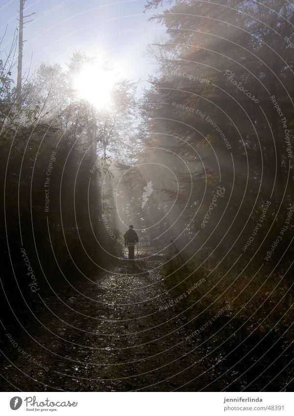 Herbstwanderer Nebel Sonnenstrahlen Wald wandern Waldlichtung Licht herbstlich