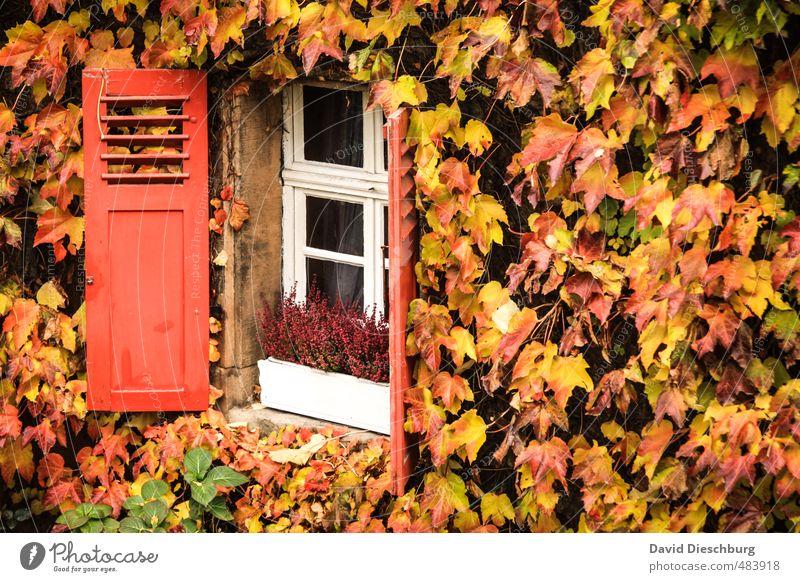 Offen für den Herbst Stadt grün weiß Pflanze Tier Blatt Haus schwarz gelb Fenster Wand Mauer Garten braun orange