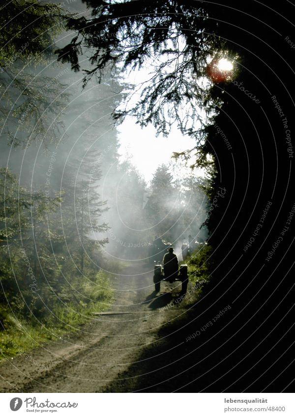 Männertour mit Traktoren Natur grün Nebel Tanne Fußweg Traktor