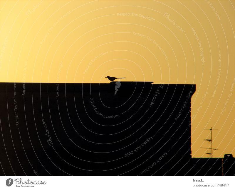 Abflug Elster Dach Haus Vogel Fabrik Antenne Beginn gelb Gebäude Tier Licht klug klein clever winzig Herbst herbstlicht Himmel Sonne gold fliegen frei Freiheit