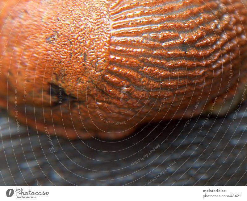 Schnecke 03 Tier Nacktschnecken Makroaufnahme Schleim Außenaufnahme Nahaufnahme macroaufnahme tiefenschärfe gering glibber meisterleise