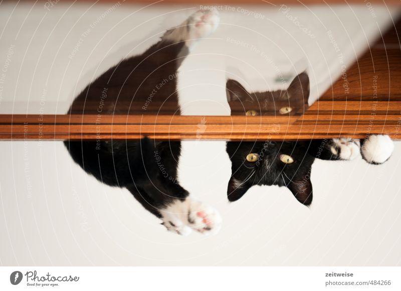 was machst du denn da? Katze weiß Erholung Tier schwarz liegen braun beobachten Fell Haustier Pfote Glasscheibe geteilt
