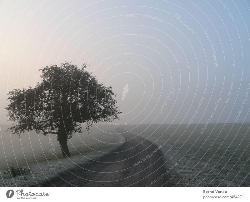 Morgenfrost Herbst Nebel Eis Frost Baum Sträucher Wiese Wege & Pfade blau grau grün Horizont Einsamkeit ruhig Idylle natürlich Schlangenlinie Gras kalt Farbfoto