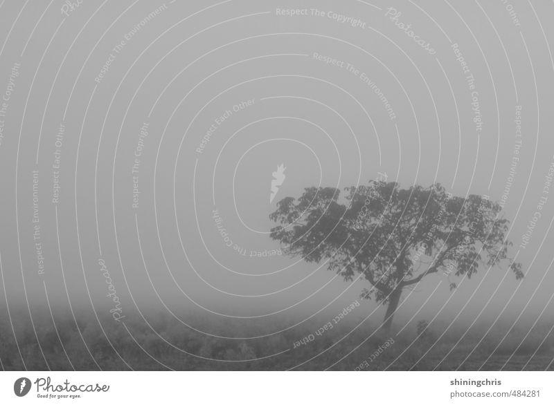 shades of grey Umwelt Natur Landschaft Himmel Herbst Winter schlechtes Wetter Nebel Baum Feld Unendlichkeit gruselig grau ruhig Trauer Sehnsucht Einsamkeit