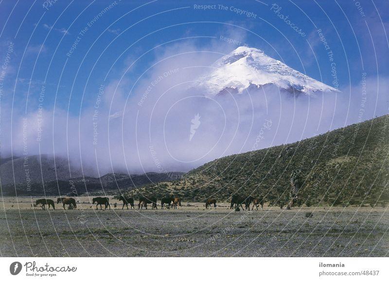 Wildpferde vor dem Vulkan Cotopaxi in Ecuador Wolken Pferd Südamerika