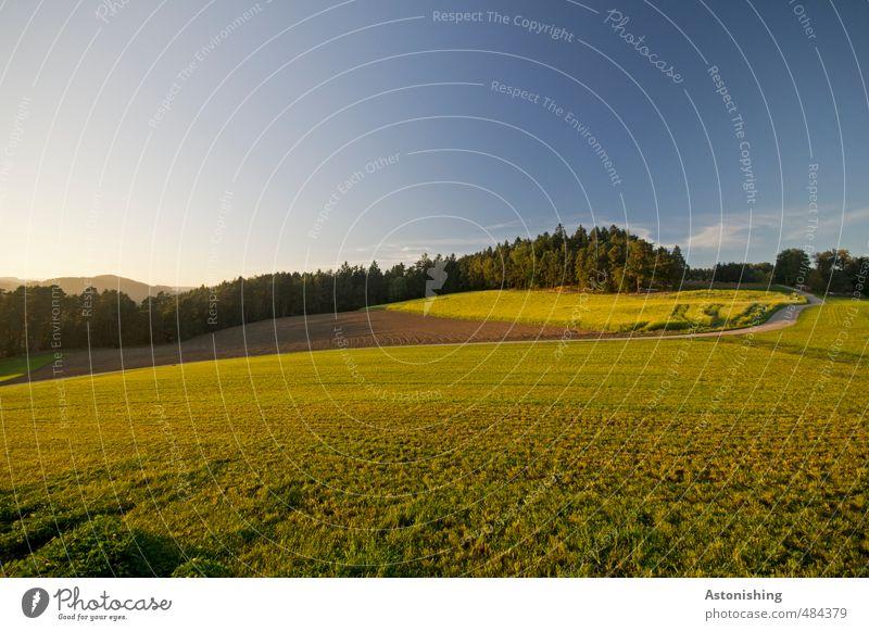 im Abendlicht Umwelt Natur Landschaft Pflanze Luft Himmel Wolkenloser Himmel Horizont Sonne Sonnenaufgang Sonnenuntergang Sonnenlicht Herbst Wetter