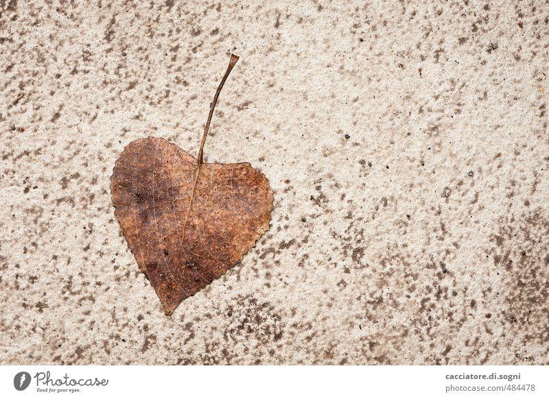 Mit Liebe vom Herbst Umwelt Schönes Wetter Blatt Straße Herz einfach Freundlichkeit natürlich schön unten braun Fröhlichkeit Lebensfreude Optimismus
