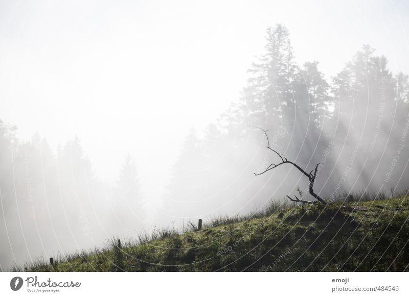 Ast Umwelt Natur Landschaft Herbst Nebel Feld natürlich Farbfoto Gedeckte Farben Außenaufnahme Menschenleer Textfreiraum links Textfreiraum Mitte Morgen Tag