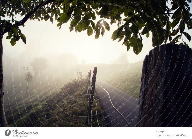 Nebelgrenze Natur Landschaft dunkel Umwelt Herbst natürlich Feld