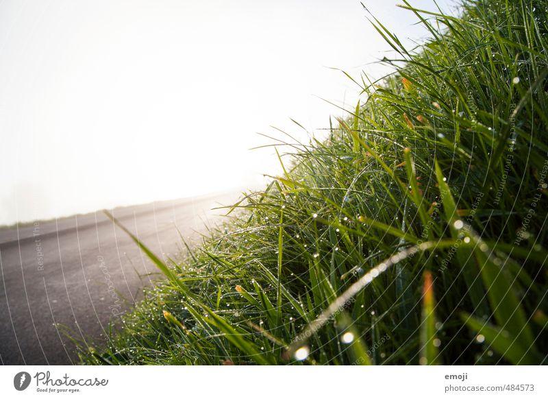 Hang Natur grün Landschaft Umwelt Wiese Gras natürlich nass Wassertropfen
