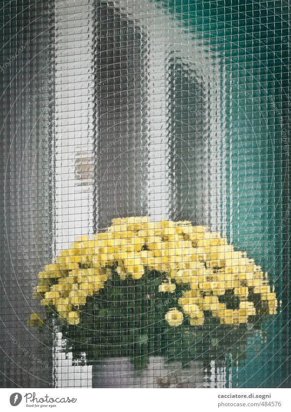Hinter-Glas-Kunst Umwelt Pflanze Schönes Wetter Blume Topfpflanze Balkon Fenster Blumenstrauß Duft Freundlichkeit positiv gelb türkis weiß Romantik bescheiden