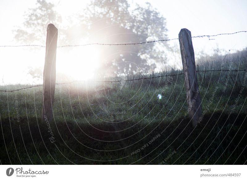 in der Früh Umwelt Natur Landschaft Herbst Nebel Gras außergewöhnlich natürlich Zaun Zaunpfahl Farbfoto Gedeckte Farben Detailaufnahme Menschenleer Morgen