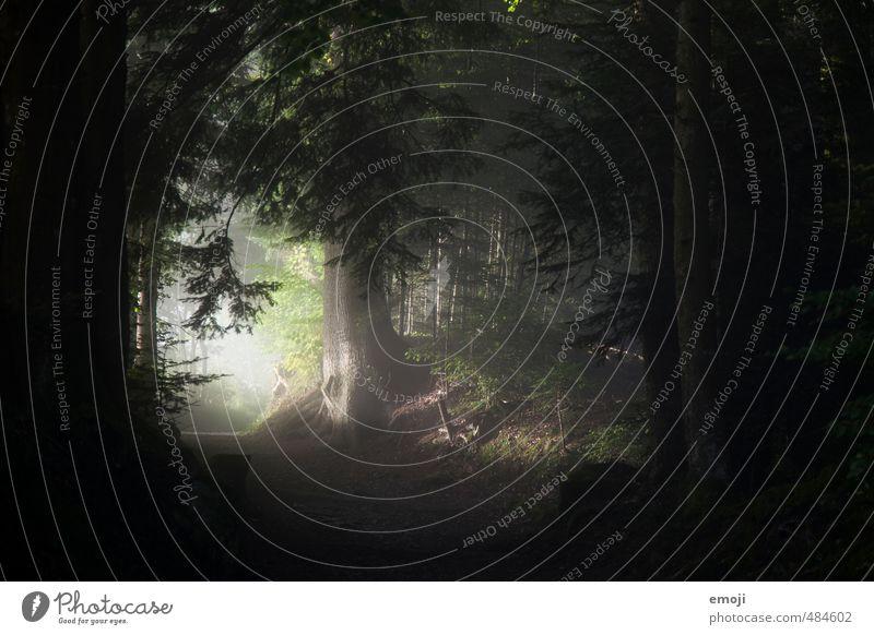 Jede dunkle Nacht hat ein helles Ende Natur Baum Wald dunkel Umwelt natürlich Nebel bedrohlich Grünpflanze