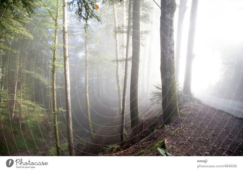 grün-grau Natur Baum Landschaft Wald kalt Umwelt Herbst natürlich außergewöhnlich Nebel