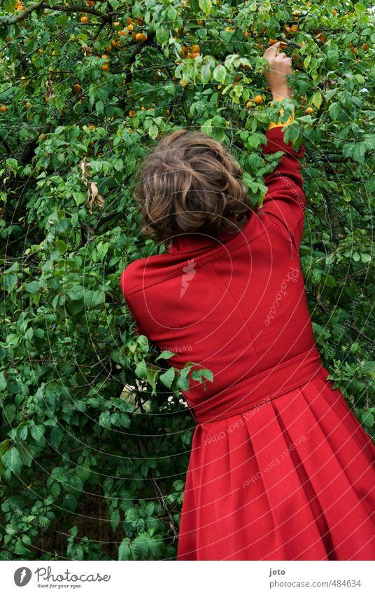 mal naschen Natur Jugendliche Sommer Baum Junge Frau Leben feminin Gesunde Ernährung Glück Essen Gesundheit Garten Frucht Zufriedenheit frei Lebensfreude