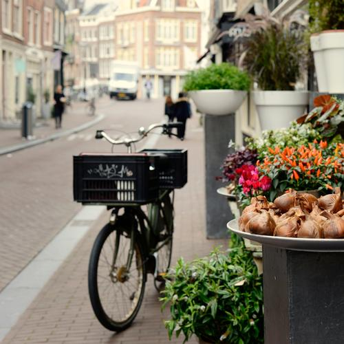 Amsterdamer Floristik kaufen Ferien & Urlaub & Reisen Sightseeing Städtereise Fahrradfahren Mensch Herbst Blume Topfpflanze Stadtzentrum Altstadt Verkehrsmittel