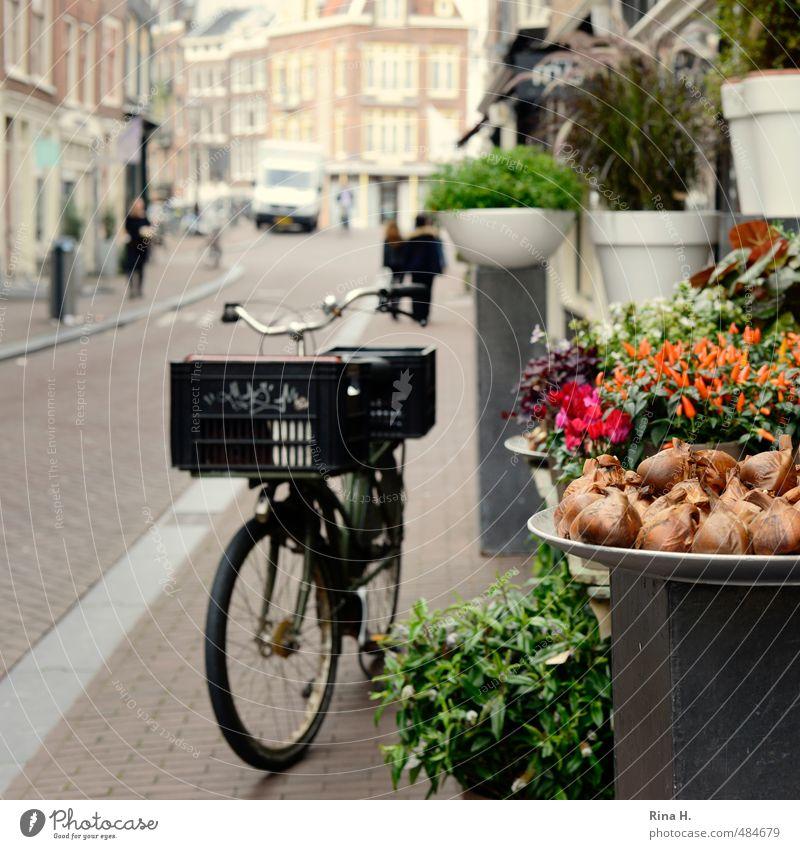 Amsterdamer Floristik Mensch Ferien & Urlaub & Reisen Blume Straße Herbst Fahrrad warten stehen kaufen Blühend Fahrradfahren Stadtzentrum Sightseeing Altstadt