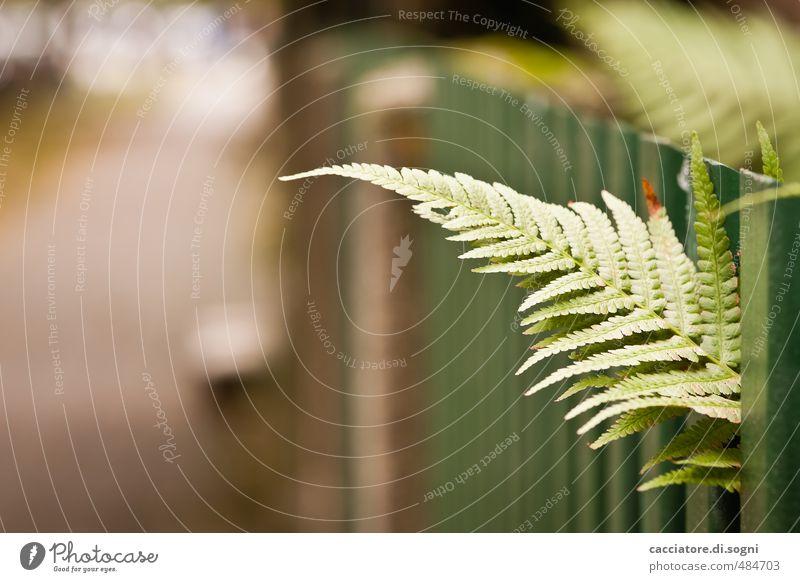 Kurz mal raussehen Stadt grün Pflanze Blatt Umwelt Erotik Herbst Wege & Pfade Freiheit natürlich braun Schönes Wetter einfach Abenteuer Lebensfreude Neugier