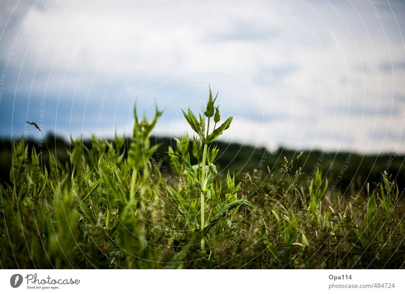 "Spitz pass auf Umwelt Natur Landschaft Pflanze Tier Sommer Sträucher Blatt Blüte Grünpflanze Nutzpflanze Feld Blühend Wachstum ""Spitz Ähre wachsen Getreide"
