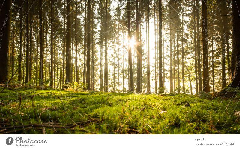Here comes the sun Natur Pflanze Sonne Sonnenlicht Baum Gras Sträucher Moos Wald ästhetisch Glück schön ruhig Farbfoto Außenaufnahme Menschenleer Morgen Licht