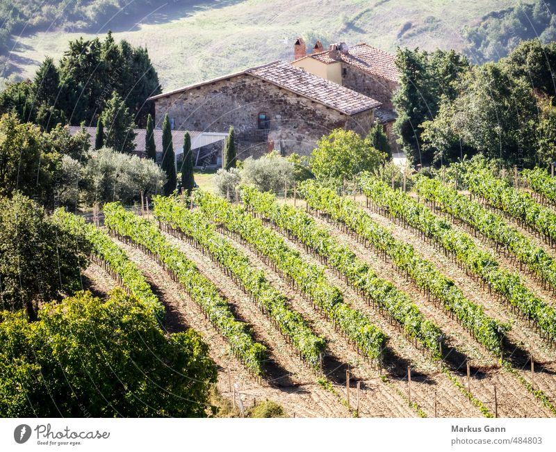 Weinreben in der Toskana Natur Ferien & Urlaub & Reisen Pflanze schön Sommer Baum Sonne Lifestyle Tourismus Feld Idylle Sträucher Europa Italien Hügel Wein