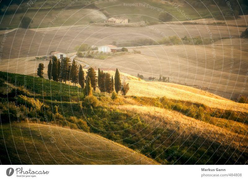 Toskana Landschaft Ferien & Urlaub & Reisen Sommer Natur braun gelb gold grau Italien Zypresse Licht Abend Hügel Grasland Feld Wiese Baum Haus grün Farbfoto