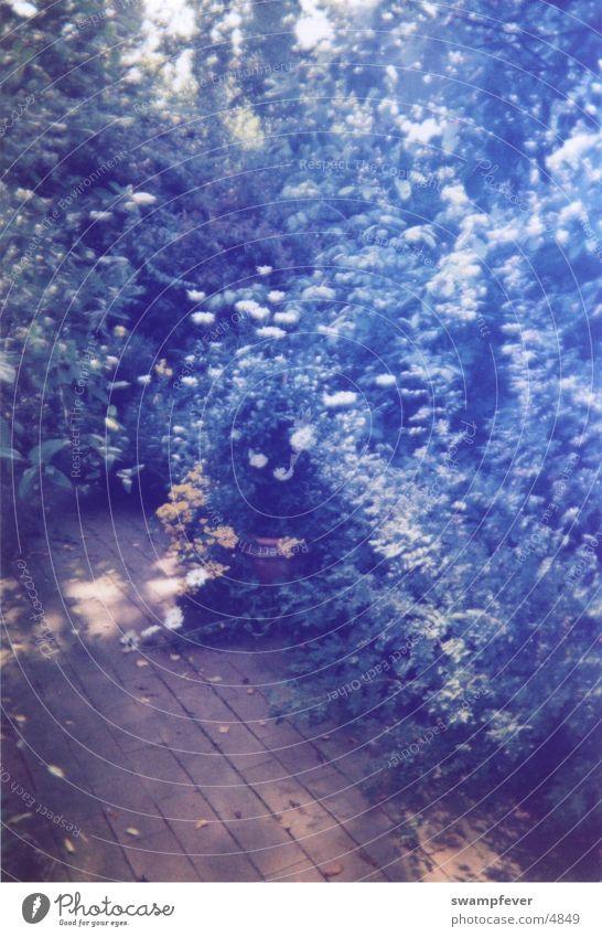 Im Gegenlicht Natur Baum Blume Pflanze Wald