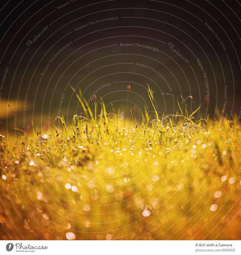a warmth that isn't Natur schön Landschaft Umwelt Wiese Herbst Gras Feld glänzend Schönes Wetter Tau