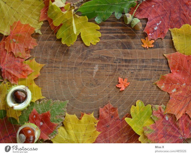 Diegos Herbstprojekt Freizeit & Hobby Basteln Dekoration & Verzierung Erntedankfest Halloween Blatt Holz mehrfarbig Herbstlaub Rahmen Hintergrundbild