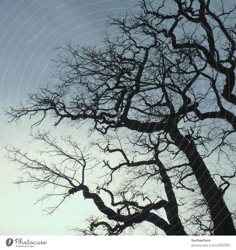 Stockwerk | mehrstöckig Umwelt Natur Luft Himmel Sonnenlicht Winter Baum Linie alt dunkel wild schwarz Stimmung bizarr Wandel & Veränderung Zeit Gedeckte Farben