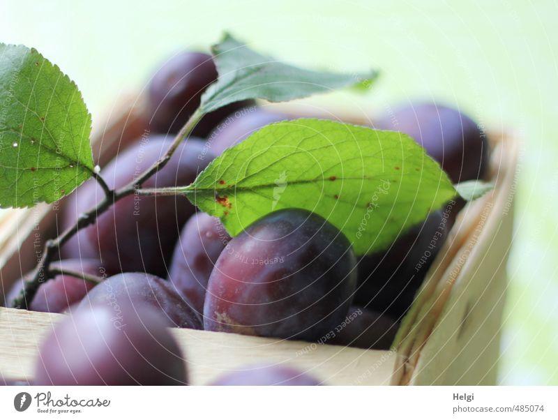Zwetschgenernte... grün Blatt gelb natürlich Gesundheit liegen Lebensmittel Frucht authentisch frisch ästhetisch Ernährung genießen süß einzigartig violett