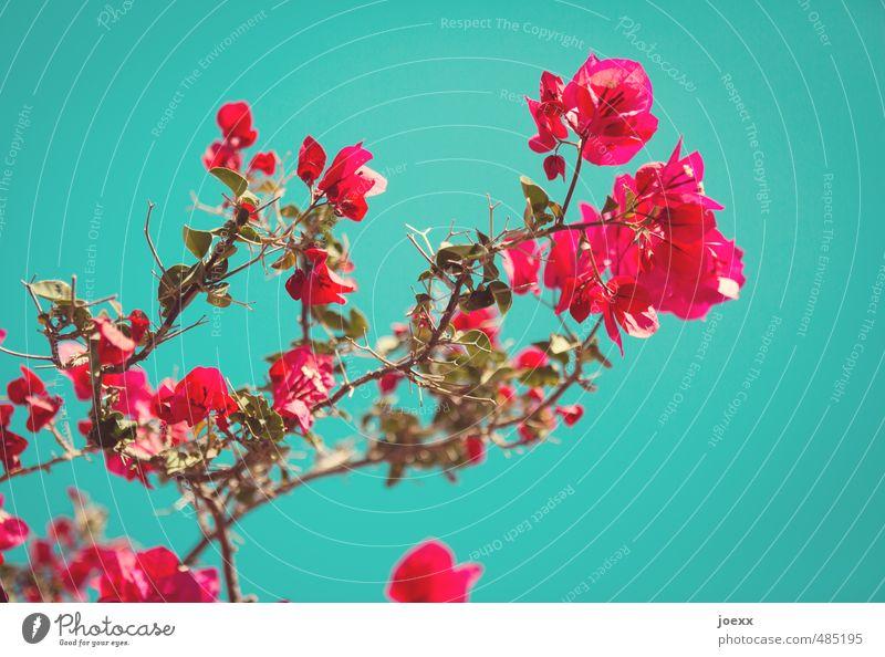 Sommer Himmel blau schön grün Farbe Pflanze rot Ferne Blüte Stil Glück rosa Idylle Schönes Wetter Blühend
