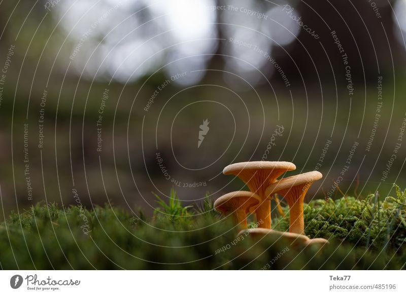 Diese Drei Umwelt Natur Landschaft Pflanze Wildpflanze Wald ästhetisch Pilz Waldboden Außenaufnahme Makroaufnahme Menschenleer Abend Schwache Tiefenschärfe