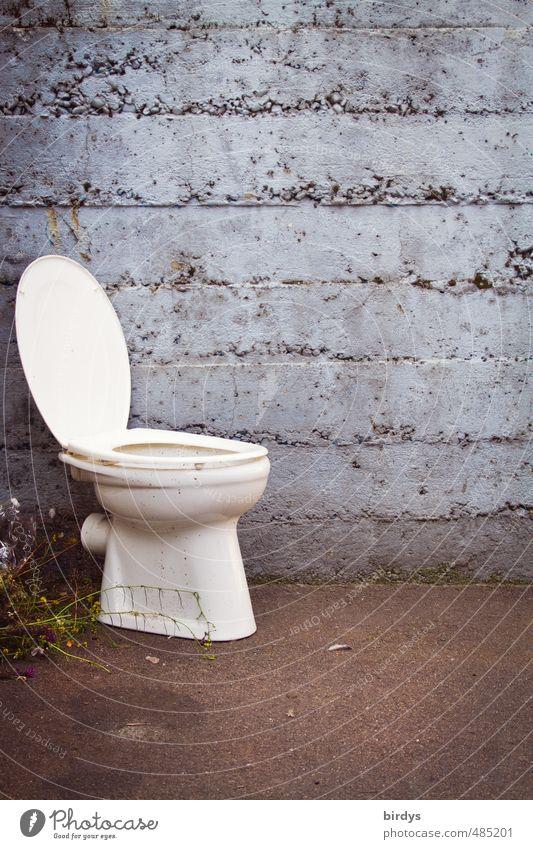 50 cent Toilette Mauer Wand außergewöhnlich lustig trashig Gelassenheit bescheiden bizarr Idee Kreativität Problemlösung Stil Tabubruch Häusliches Leben alt