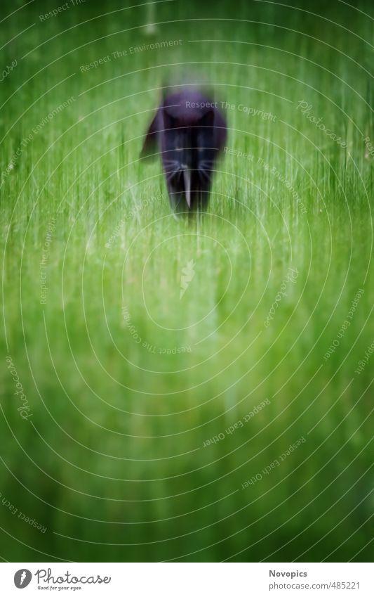 mystic cat Katze Natur grün Landschaft Tier Wiese Bewegung laufen Politische Bewegungen Jagd Haustier Hauskatze mystisch Vignettierung Katzenauge