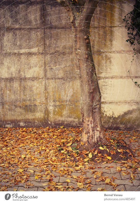 Runtergekommen Herbst Baum Blatt Mauer Wand Pflastersteine Pflasterweg braun gelb grau grün schwarz Herbstlaub trüb Traurigkeit Efeu Beton Betonwand Moos Fuge