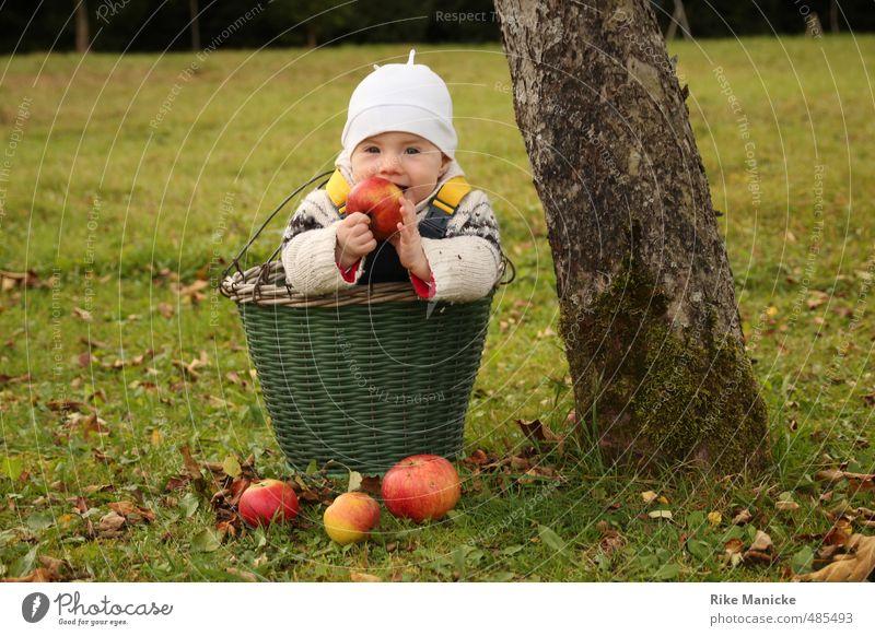 Apfelernte Natur grün Baum Mädchen Herbst Frucht Kindheit Zufriedenheit Lächeln Baby niedlich genießen Lebensfreude Erntedankfest 0-12 Monate